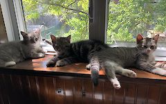 picture for three-little-kittens--purring